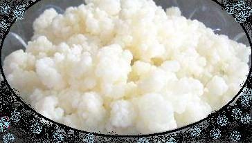 Tibeto pieno grybas - Gydomasis kefyras