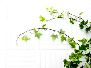 HD darbastalio fonai - gamta - minimalizmas