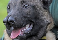 Rinkiniai: Šuo su dviejomis nosimis