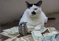 Rinkiniai: Katinai - gangsteriai