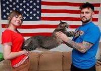 Rinkiniai: Katinų pasaulio Sabonis iš šiukšlyno