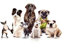 skaitiniai: Kokį šunį pasirinkti?
