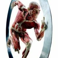 tekstai: Septynios žmogaus kūno paslaptys