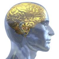 Auksinės mintys iš auksinių smegenų
