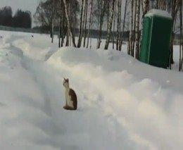 1. Pavojingas aplinkiniams katinas