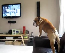 4. Šuo apsimeta drambliu?!