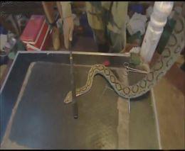 2. Demonstracija kaip veikia gyvatės nuodai