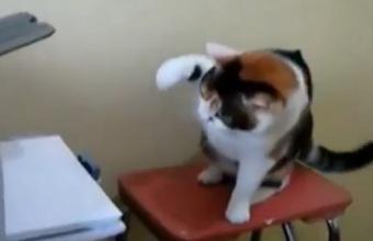 3. Katės ir spausdintuvai (rinkinys)
