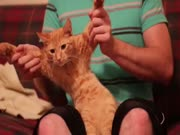 4. Dancing dubstep cat