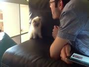 3. Kačiukas gaudo orą