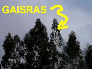 4. KAI GAISRAS- NEGRIEKAS IR APSIVOGT