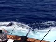 1. Kardžuvė prieš mirtį bandė nusmeigti žveją