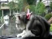2. Katinas ir valytuvai