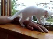 3. Labai rūpestingas katinas