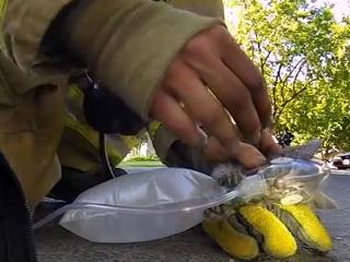 2. Gaisrininkai išgelbėjo kačiuką
