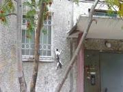 3. Katė alpinistė