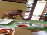 2. Vagilka beždžionė apvogė turistą