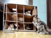 4. Vaikų darželis kačiukams