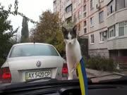 2. Katinas - katapulta