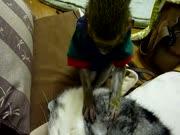 1. Katinas utėlius ir beždžionė gurmanė