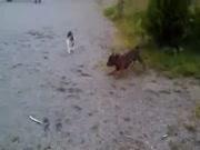 4. Katino pergal? prieš šun?