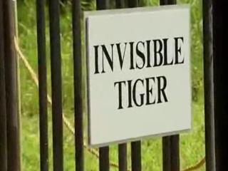 1. Nematomas tigras (slapta kamera)
