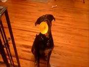4. Šuo groja dūdele
