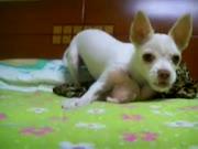 3. Šuo nindzia kurio neįmanoma nufilmuot