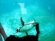 4. Šuo žvejoja pingvinus ant savo uodegos