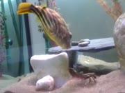 2. Vėžio ir žuvies kova