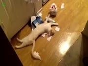 4. Video rinkinys apie kates