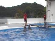 4. Delfinai žaidžia kamuoliu