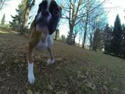 4. Dvikojis šuo