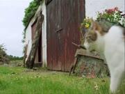 4. Katė prižiūri kačiukus kaip savus