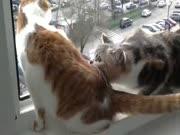 1. Katinas panikoje,kad draugas iškris per langą