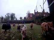 4. Mini kiaulių maratonas