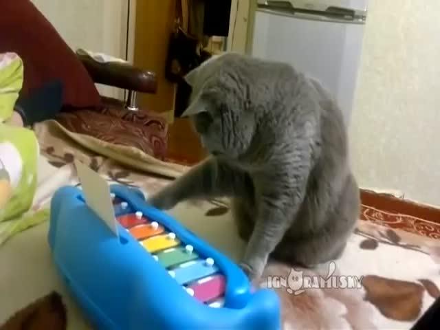 3. Populiarių interneto kačių rinkinys