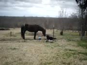 1. Arklys ir šuo žaidžia kartu