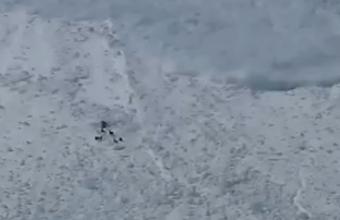 2. Kalnų ožiai ir sniego lavina