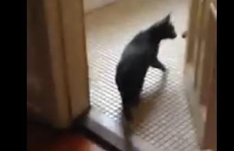 4. Voverė vagilka užsirovė ant katino