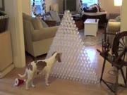 3. Kalėdinė dovanėlė šuniui
