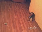 2. Juokinga katės pozicija atakai