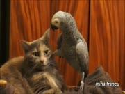 1. Protingos papūgos ir kvaili katinai
