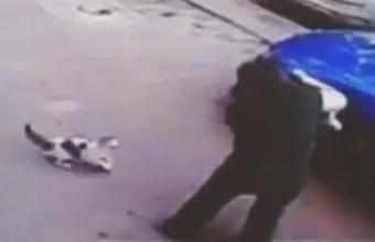 1. Psichinis katinas bando užmušti šunį