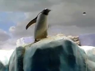 3. Juokingi pingvinų gyvenimo momentai