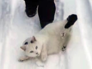3. Katė atsisako šalti letenas