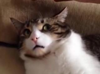 3. Katinas žino- dabar gerai nebus