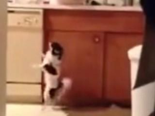 3. Šuo šoka sals?