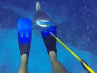 3. Ryklys gina savo medžioklės plotus