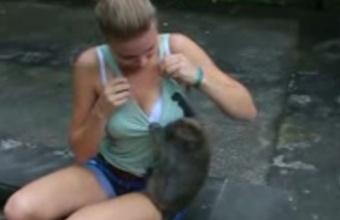 1. SuperBeždžionės